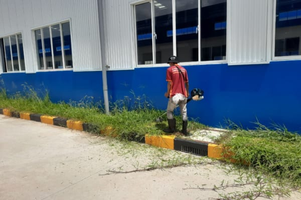 Dịch vụ cắt tỉa cây cỏ đáp ứng nhu cầu của nhiều khách hàng